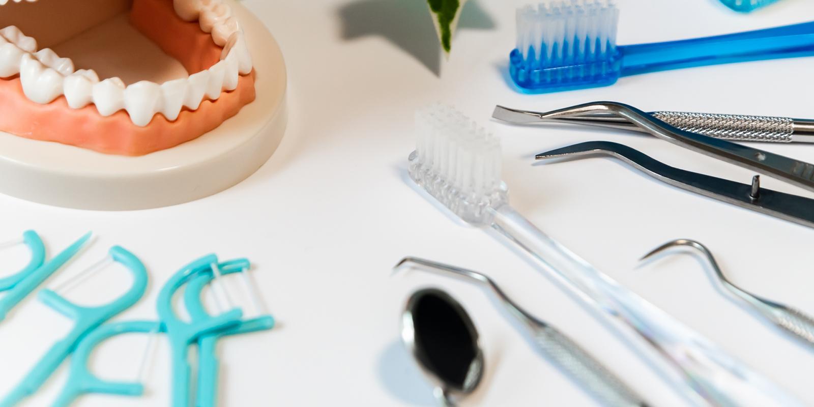 歯の模型と器具
